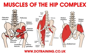 MUSCLES-OF-HIP